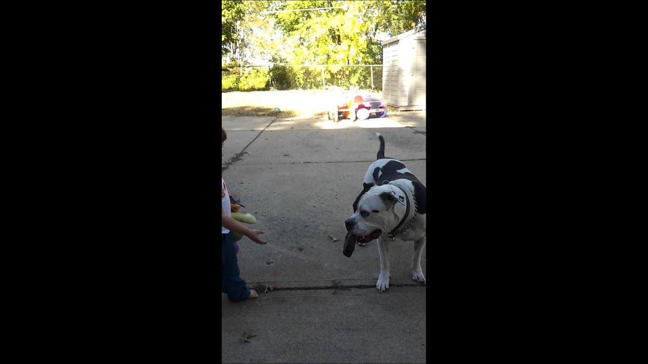 Dog teases little girl