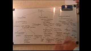 Введение в языкознание  Система языка