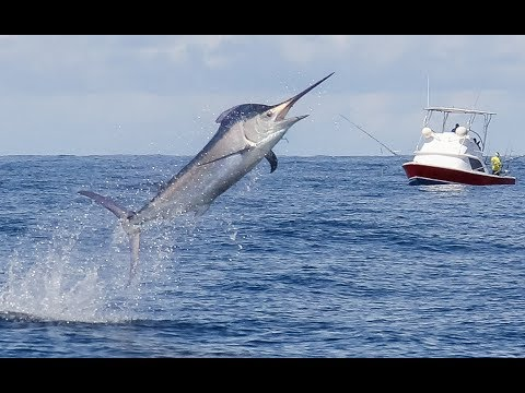 Tropic Star Lodge --- Offshore Fishing
