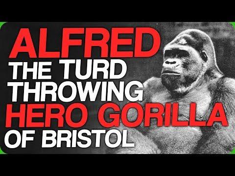Alfred - The Turd Throwing Hero Gorilla of Bristol (Writer's Twitter)