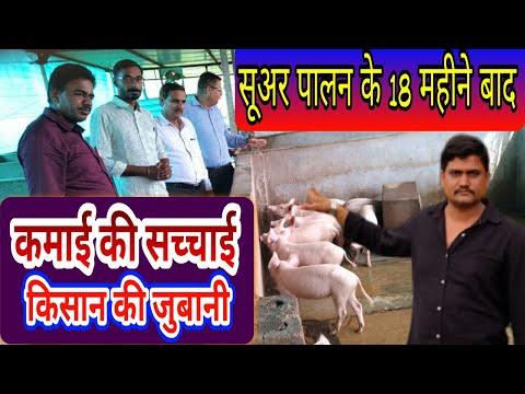 सूअर पालन में कमाई की सच्चाई किसान की जुबानी Sucess Story Of Pig Farming  Farmer - Agritech Guruji