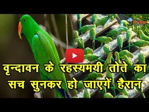 वृन्दावन के रहस्यमयी तोते का सच सुनकर हो जाएगें हैरान | Vrindavan Parrot Mystery