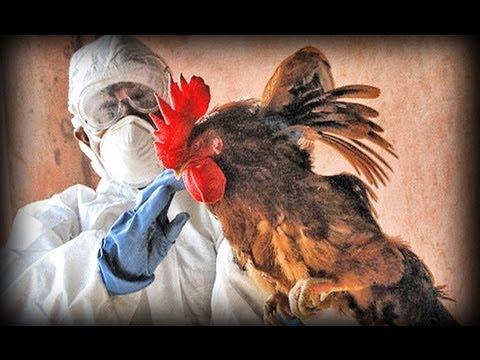 Avian Flu (full documentary)