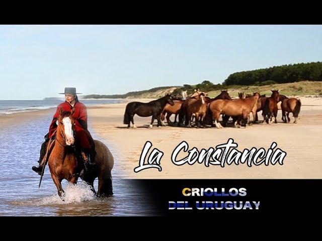 Criollos de La Constancia