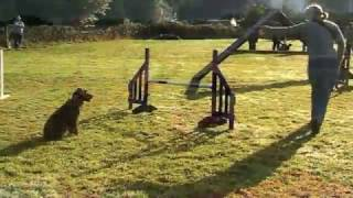 This Video Previously Contained A Copyrighted Audio Track. Due To A Claim By A Copyright Holder, The Audio Track Has Been Muted.     Tricks 4 Treats -dog Agility Training