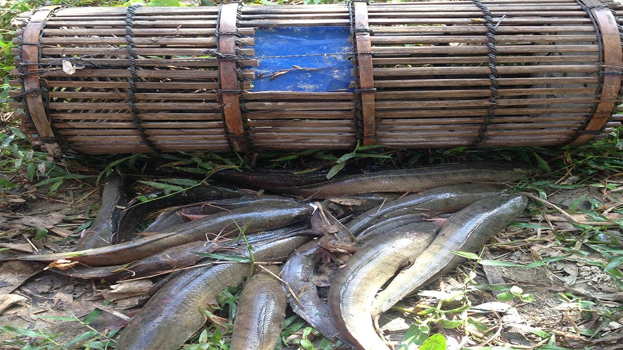 Lades In Trap : Amazing bamboo trap cambodia fish trapping village traditional