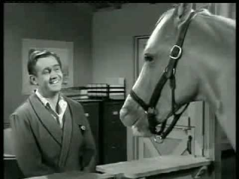Mr Ed Wants Life Insurance