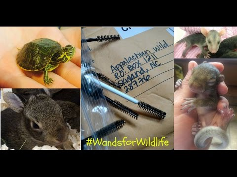 Wands for Wildlife - how it began!