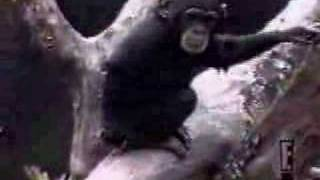Repeat youtube video Macaco Enfia o Dedo no Ânus e Cheira