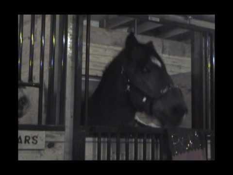 Bert the talking horse