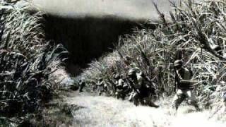Cris B - Dark Side of the Jungle (Rmx)