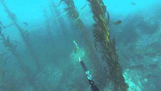 Stillwater playground or spearfishing in stillwater , carmel california