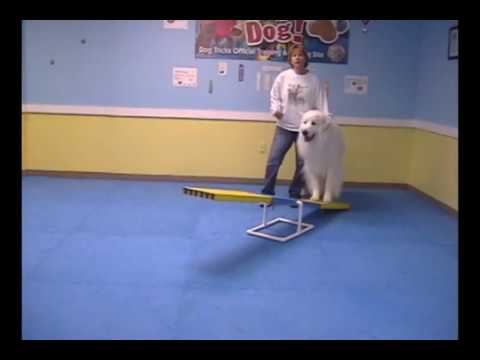 Teach Your Dog How To Use The Agility Teeter Totter