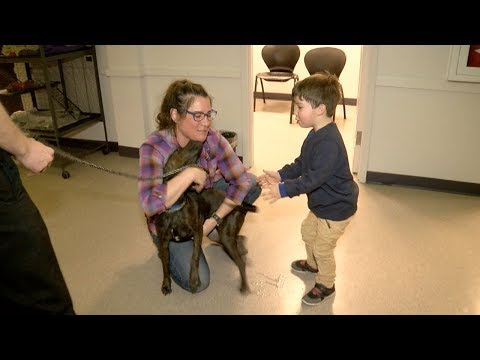"""""""Rubble"""" stolen service dog reunited with family to squeals of joy!"""