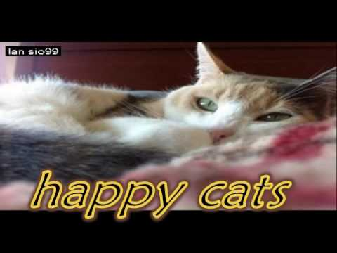 Funny Videos Of Funny Cats Compilation 2016 [BEST OF] lansio99