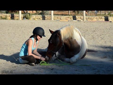 Tuto N°3 ★ Apprendre le coucher a son cheval.