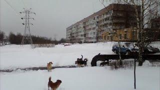 ТВЭл - Собака бойцовской породы напала на жителей Электрогорска (22.01.16)