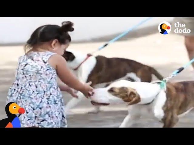 Девојче се сретнува со нејзините кучиња кои се изгубиле по ураганот Харви