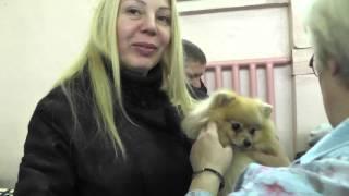 Региональная выставка собак   Кострома