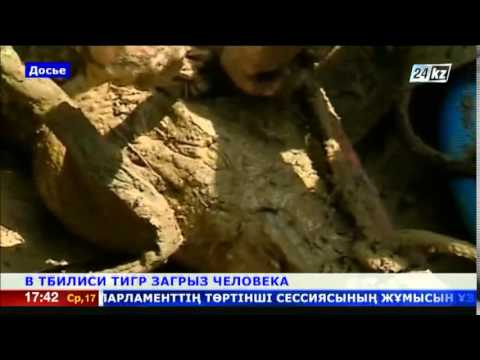 Тигр съел человека в Тбилиси