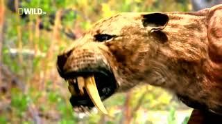 Документальные фильм про животных :Саблезубый Тигр Документальные фильмы Nat Geo Wild HD