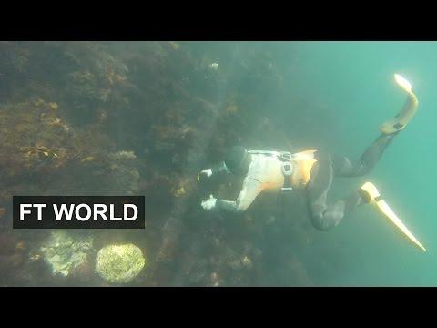 South Korea's elderly haenyeo divers | FT World