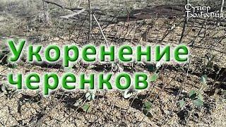 Природное земледелие. Укоренение черенков(Это видео о природном земледелии в нашем эко-поместье мы решили посвятить подготовке посадочного материал..., 2015-04-02T10:46:41.000Z)