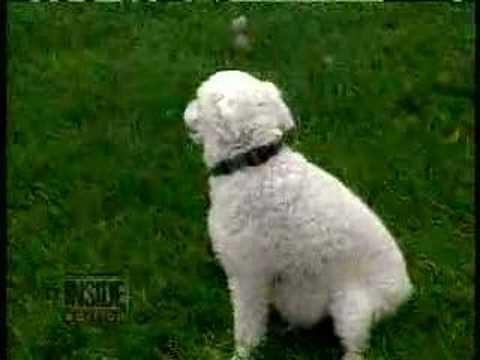 narcoleptic dog