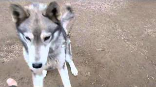 A day in the kennel.wmv