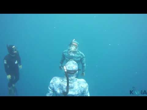Level 2 Fii Freediving Course