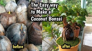 Download lagu THE  EASY WAY TO MAKE A COCONUT BONSAI