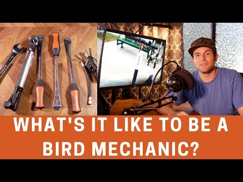 What's it Like to Be a Bird Mechanic? - YouTube