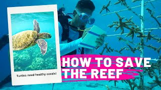 REEF RENEWAL ON BONAIRE | How to save the reef | Silver Shark Paddle Boards