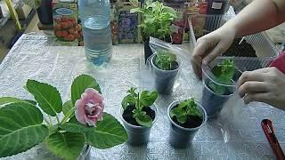 🌼Петуния из черенка. Легко выращивать !!! Проще простого, как и всё остальное🌼 🌱