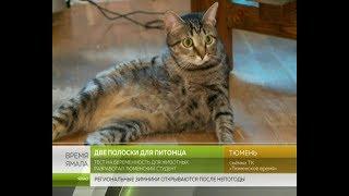 Тест на беременность для животных разработал тюменский студент
