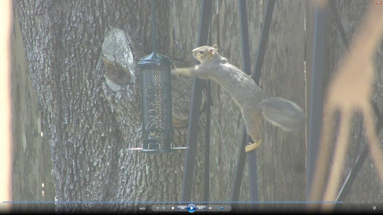 squirrel buster bird feeder instructions