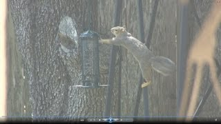 Squirrel Buster Mini Bird Feeder Review