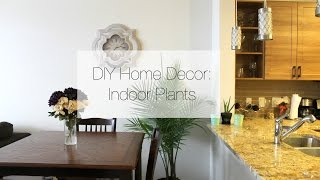 DIY Home Decor: Indoor Plants