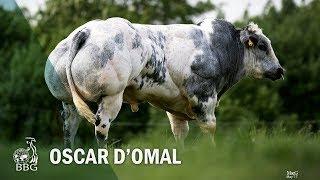 OSCAR D'OMAL - Portes ouvertes BBG 2017