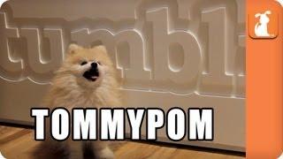TommyPom - Memed