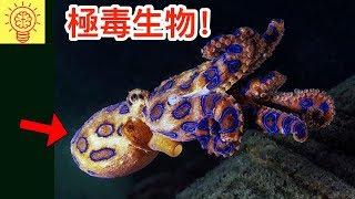 10種對人類極度致命、劇毒的生物!
