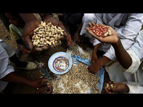 لماذا فقد السودان ريادته في السوق العالمية للفول السوداني؟ …  - نشر قبل 53 دقيقة