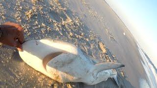 Серфінг акула рибалка з арахісовим бункерних установок лідерів & гачки