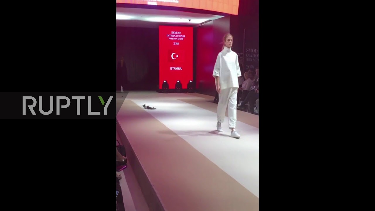 c0ba7cddc8 CAT Moss! Fashionable feline prowls the runway at Istanbul fashion show