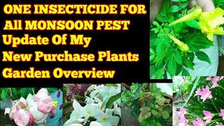 Sunday Update Garden Overview One Insecticide for All plants New Plants Growing Update