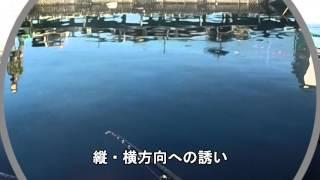 海上釣堀  脈釣り(際釣) 真鯛