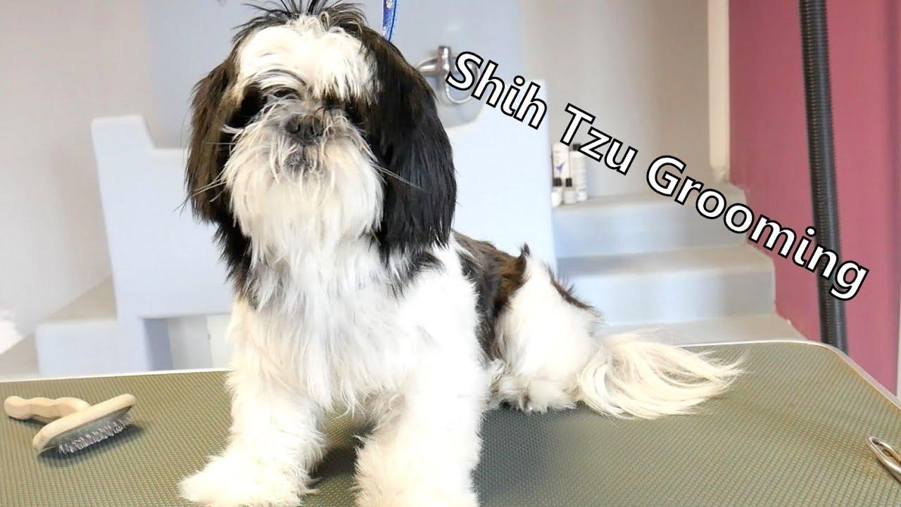 Grooming Guide Lets Groom Shih Tzu 47 Youtube