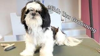 Grooming Guide - Let's groom Shih tzu! #47