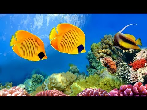 CORAL REEF AQUARIUM COLLECTION「24/7」 🔴 Relaxing Music for Sleep, Study, Yoga & Meditation