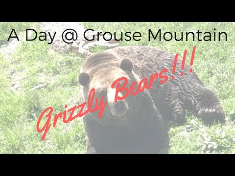 Our day trip to Grouse Mountain [Vancouver, B.C.]